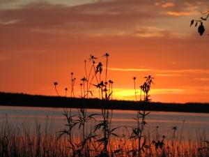 Minnesota wildflowers against a Bass Lake Sunset