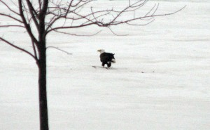 minnesota wildlife