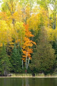minnesota_fall_color_tours